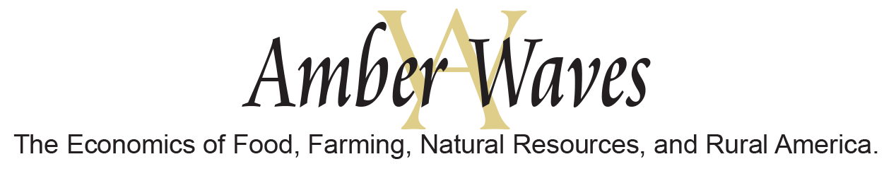 Amber Waves logo