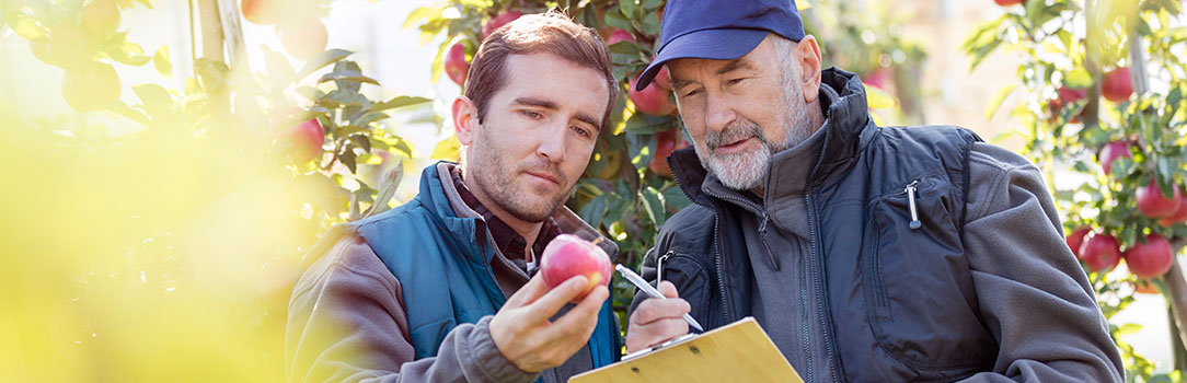 Two growers examining produce