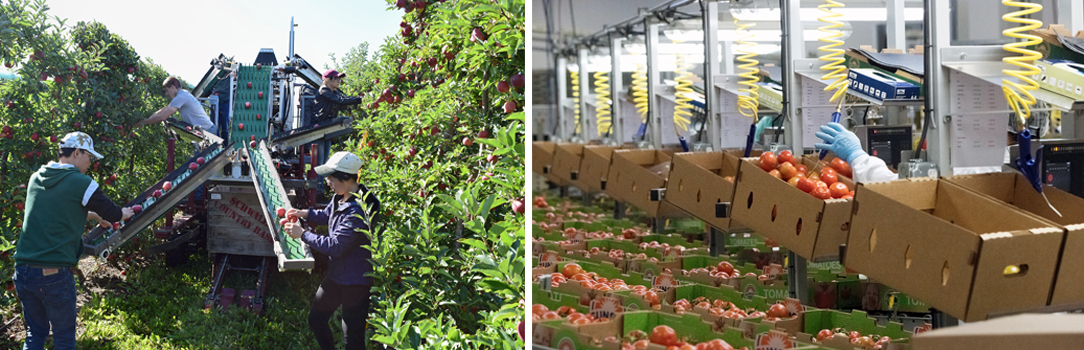USDA funded $287.7 million for 213 specialty crop automation or mechanization projects from 2008–2018