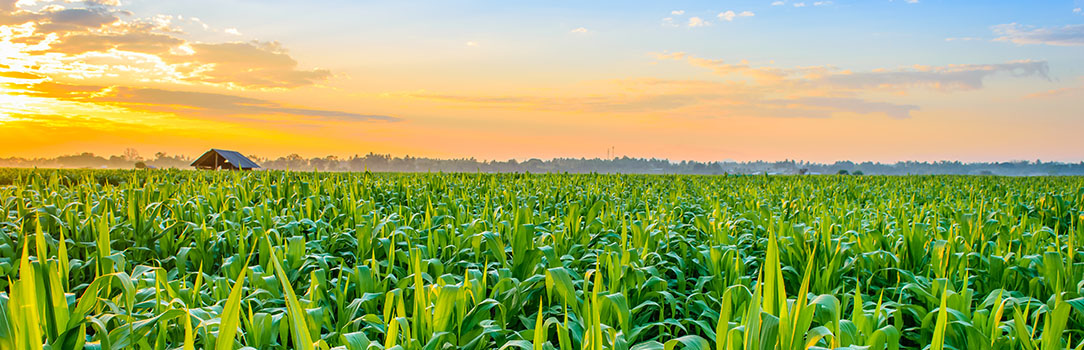 USDA's long-term agricultural projections are a departmental consensus on a longrun scenario for the agricultural sector