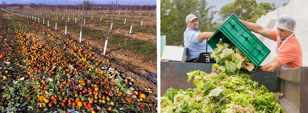 Photos of fruit and vegetables discarded on the farm field and dumped by farm workers