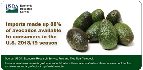Imports made up 88% of avocados available to consumers in the U.S. 2018/19 season. To the right is an image of 7 avocados.