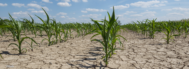 Farmers Employ Strategies To Reduce Risk of Drought Damages