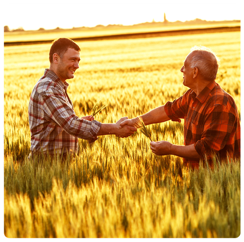 Two farmers shaking hands in middle of wheat field