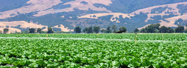The California Leafy Greens Industry Provides an Example of an Established Food Safety System