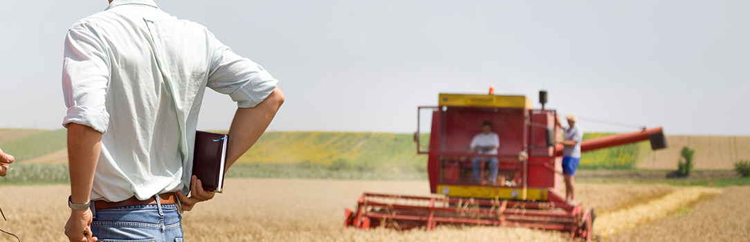 Man in a wheat field, with a combine in the background