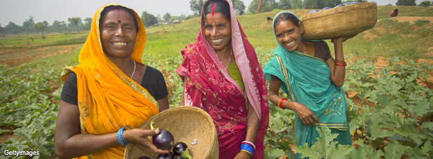 Indian women in field holding baskets of eggplants