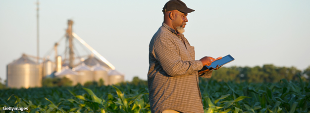 African-American farmer with tablet in corn field