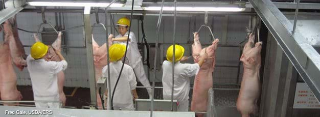 Chinese workers in a pork processing plant