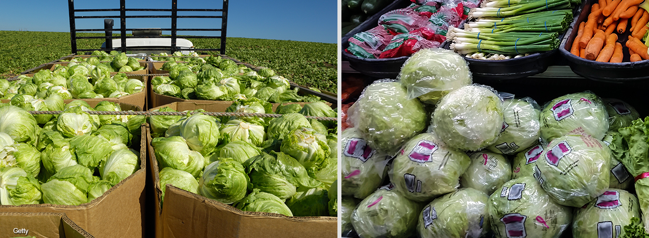Photo collage: A field of lettuce and lettuce in the produce aisle