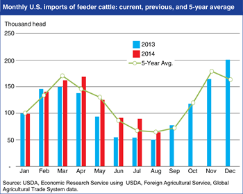 U.S. cattle imports on the rise as farmers rebuild inventories