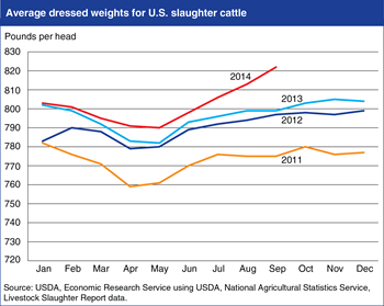 U.S. cattle dressed weights reach record levels
