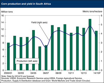 South Africa's corn production to drop as dryness cuts yields