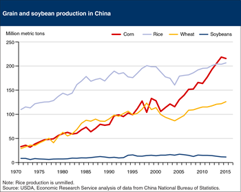 Corn became China's leading crop in 2012