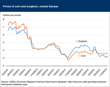 The price of sorghum has returned to below the price of corn