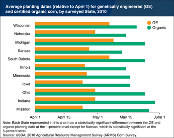 Certified organic corn was planted later than GE corn in 2010 to avoid cross-pollination