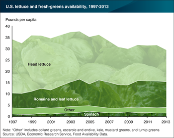 U.S. per-capita availability of romaine and leaf lettuce has almost doubled over the last 16 years