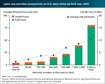 Labor productivity is higher on larger U.S. dairy farms than on smaller farms