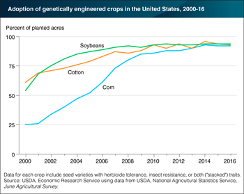 Genetically engineered varieties of corn, cotton, and soybeans have plateaued at more than 90 percent of U.S. acreage planted with those crops