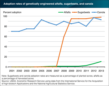 Almost all U.S. sugarbeets and canola planted in 2013 used genetically engineered seeds
