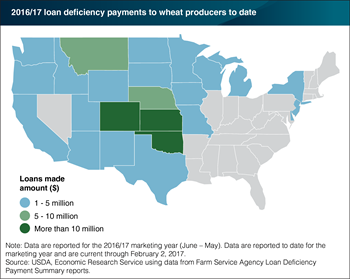 Wheat producers are eligible to receive loan deficiency payments as prices drop