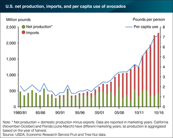 Avocado imports play a significant role in meeting growing U.S. demand