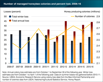 Managed honeybee colony numbers increased since 2006 even as colony mortality remained high