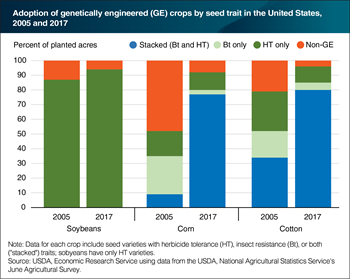 Most GE corn and cotton seeds now have both herbicide tolerance and insect resistance