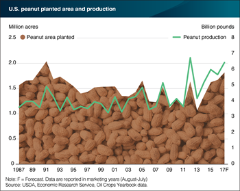 Peanut supplies may surge with a fourth consecutive acreage increase