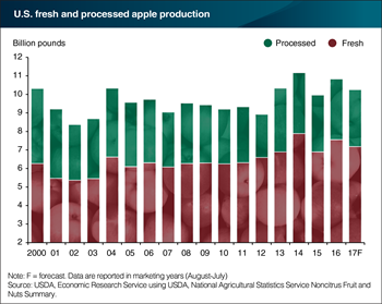 The fall apple harvest is expected to dip slightly this year, but still plenty to go around