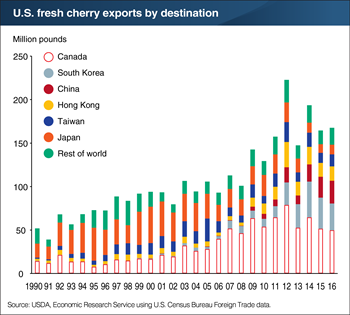 The United States is the world's second leading exporter of fresh cherries with Canada as its leading destination