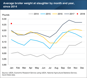 Broiler weights start 2018 by showing continued growth