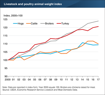 Livestock and poultry weights per animal have increased steadily since 2000