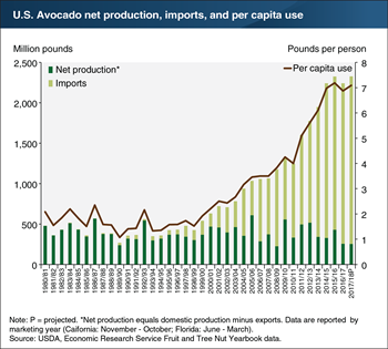 Avocado imports continue to play a significant role in meeting growing U.S. demand