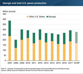 Hurricane Michael's impact on Georgia's 2018 pecan crop will likely lead to lower production than previously expected