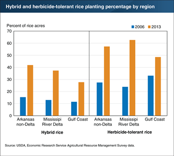 Rice producers in the southern United States increased adoption of hybrid and herbicide-tolerant seed varieties between 2006 and 2013