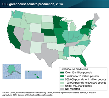 Greenhouse tomato production spans most U.S. States