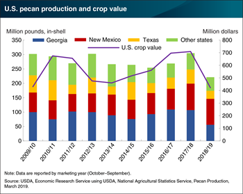 U.S. pecan production and crop value down in 2018/19