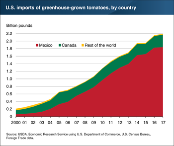 Greenhouse-grown fresh-market tomato imports have risen steadily since 2000