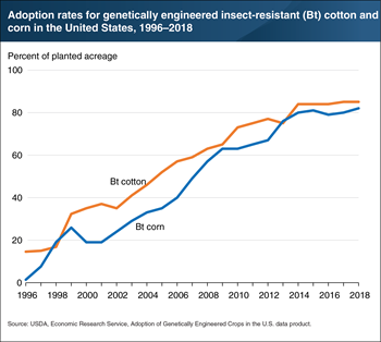 Use of insect-resistant cotton and corn seeds increased quickly and is now widespread