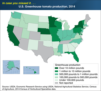 ICYMI... Greenhouse tomato production spans most U.S. States