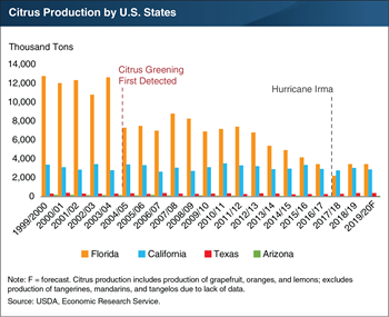 Citrus Greening Disease caused falling production in Florida, but production is forecast to stabilize in 2019/20