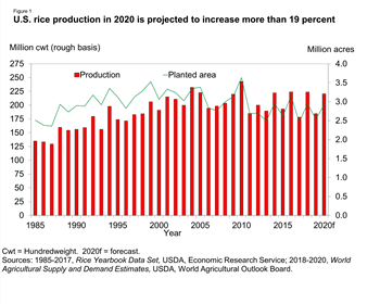 U.S. rice production in 2020 is projected to increase more than 19 percent