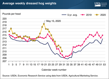 Falling hog weights suggest the hog industry is managing supply-chain disruptions from COVID-19