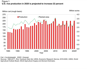 U.S. rice production in 2020 is projected to increase 22 percent