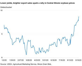 Lower yields, brighter export sales spark a rally in Central Illinois soybean prices