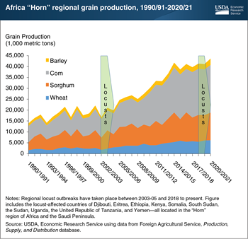 Despite locust outbreak, grain production in most acutely affected African countries set to be highest on record