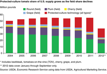 Protected-culture tomato share of U.S. supply grows as the field share declines