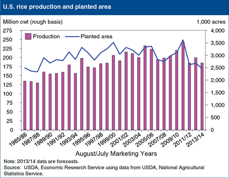 U.S. rice production forecast to decline 7 percent in 2013/14