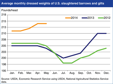 U.S. hog producers increase slaughter weights to counter PEDv effects